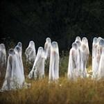A hét képei - Nagyítás-fotógaléria
