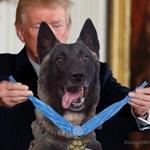 Trump nem engedi el a hős kutyát, egy borzalmas képpel tolja tovább a témát