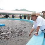 Kim Dzsong Un most egy harcsafarmot vizsgált meg