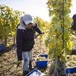Tokaji Tesco gazdaságos: innen szép nyerni
