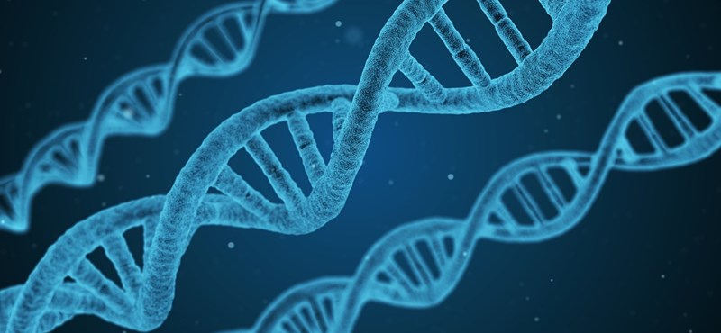 Kétperces biológiai kvíz: mindent tudtok az emberi testről?