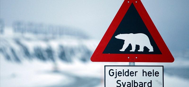 Norvégiában turistát ölt a jegesmedve