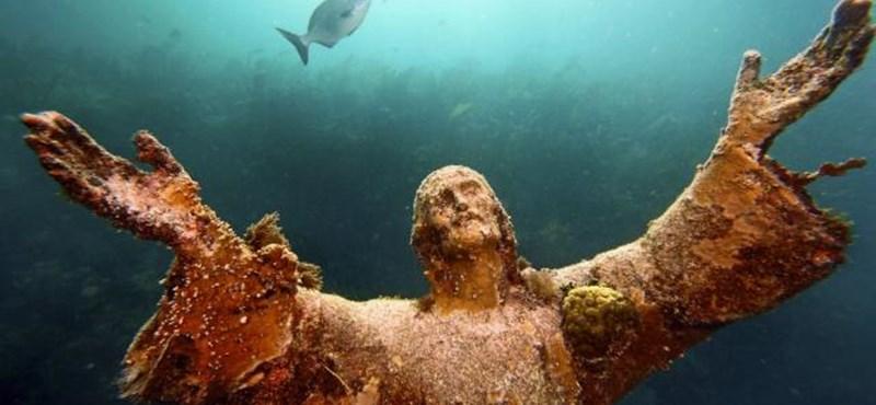 Felgyorsult az óceánok savasodása, sok élőlény kipusztulhat