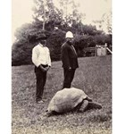 Fotó: szexuálisan aktív a 178 éves teknős, Jonathan
