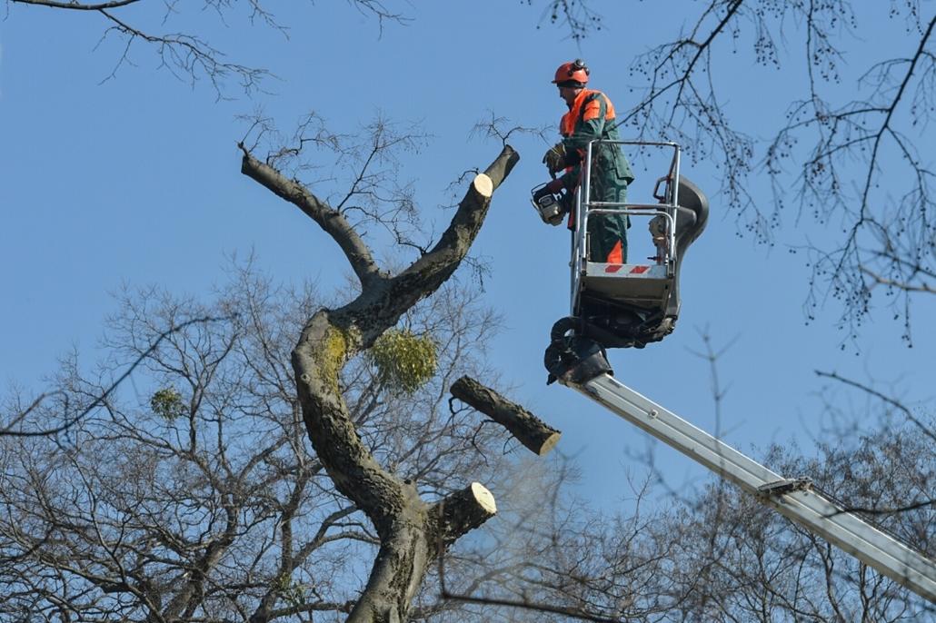 tg.16.03.17. - Vágják a fákat a Kertem épületeinél, Liget, Városliget