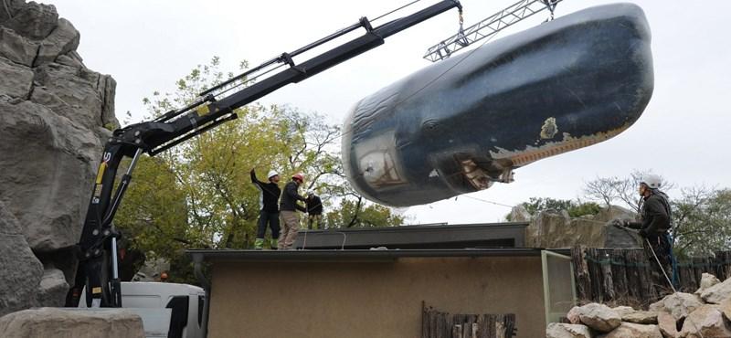 Három részletben vitték az állatkertbe az óriásbálnát