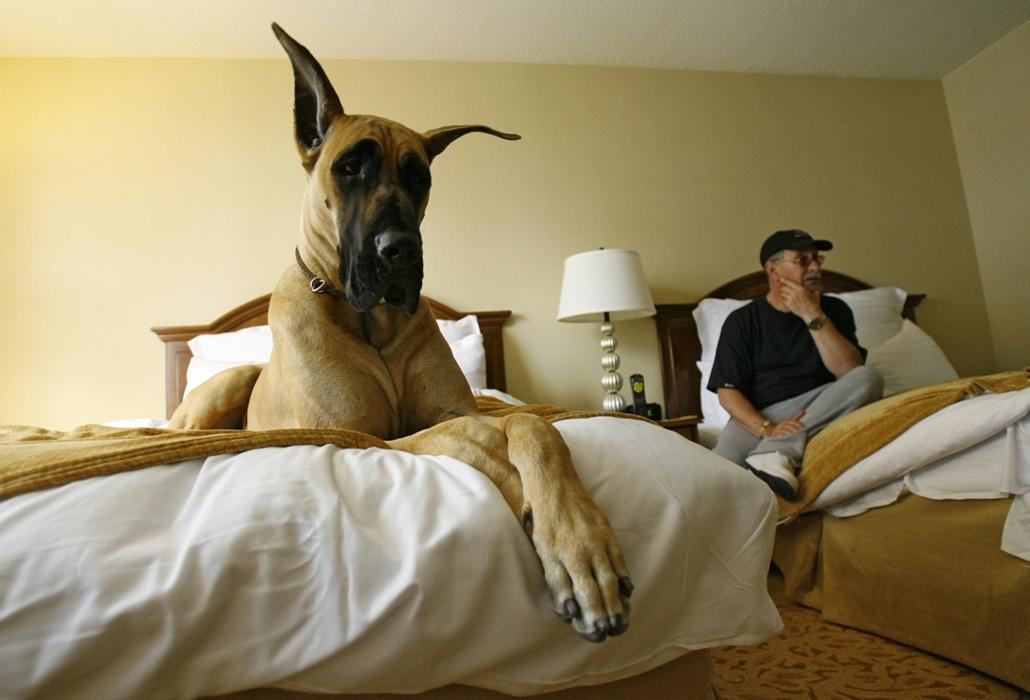 Kutyavilág - Nagyítás-fotógaléria