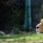 Tarol a budapesti állatkert
