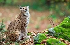 Petíciót indított a védett Csarna-völgyben épülő kisvasút ellen a WWF