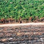 Távozik az erdőirtásokra figyelmeztető brazil szakember, akit az elnök idegen érdekek képviseletével vádolt