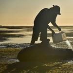 Melegszik a víz, megsínylik a delfinek a klímaváltozást
