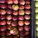 Elverte a jég a szabolcsi almát, rengeteg a kár