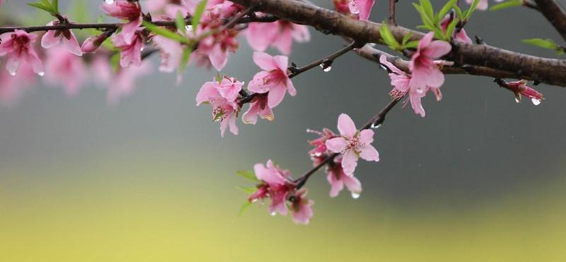 Hamisítatlan kora tavaszi idő lesz ma
