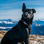 Felmentették a francia nő kutyáját agyonlövő vadászt