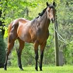 Overdose-t a világ legjobb zsokéja, Dubaj uralkodójának lovasa üli meg vasárnap