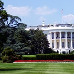 Trumpék kivágatják a Fehér Ház 200 éves liliomfájának nagy részét
