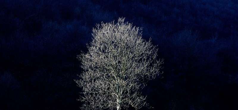 Nem minden fa alszik, de mindegyiknek van pulzusa – állítják magyar kutatók