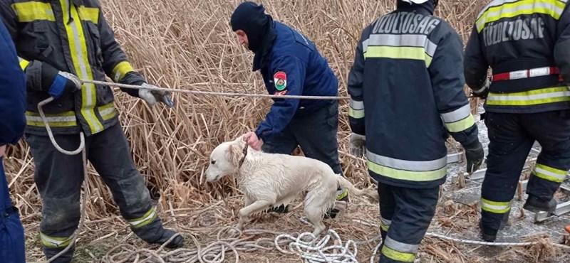 Tizenöt éves lány és kutyája alatt szakadt be a Sóstó jege
