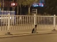80 napja nem mozdul az út széléről egy kutya, amelyik halott gazdáját várja – videó