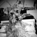 A nap kutyája:  Innoxius avagy az ártatlan