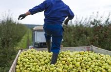 Nem tudja felszívni a mezőgazdaság a munkanélküliek tömegeit