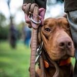 Visszavonja a kormány az állatvédelmi javaslatot