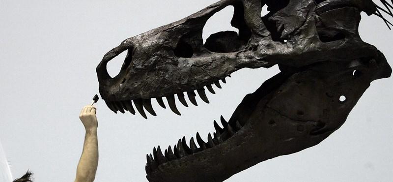 Egyszerűen túlnyerték magukat a dinoszauruszok, és ezért haltak ki?
