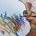 Meglepően jól fest Pigcasso, a tehetséges sertés
