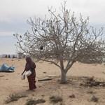 40 éve a legsúlyosabb kolerajárvány lehet Csádban