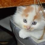 Macskaharapásba halt bele egy nő Japánban