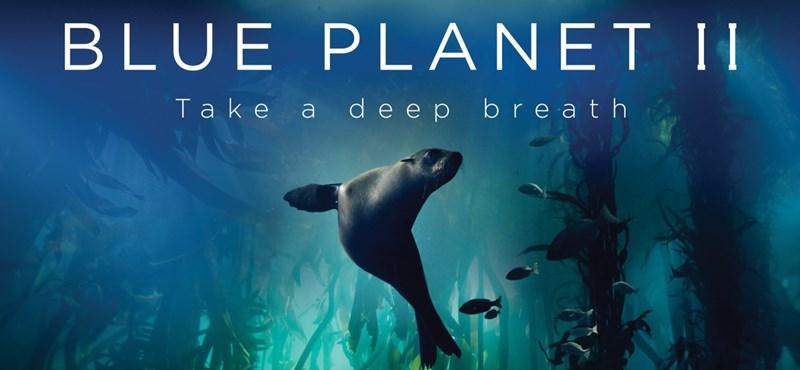 Lélegzetelállító – itt az új Attenborough-természetfilm előzetese – videó
