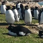 Mindig egy pingvinekkel teli szigetre vágyott? Most megveheti