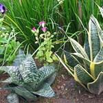 Növények, amelyek szeretik a panellakásokat