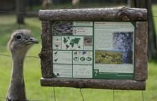 Dél-amerikai vendégmadarak pusztítanak Németországban