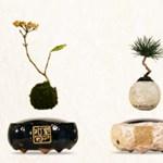 Feldobná a lakását? Rendeljen lebegő bonsai fákat