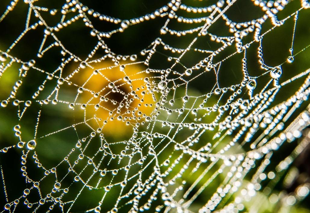 afp. hét képei - vízcseppek, pókháló, virág, Godewaersvelde, Franciaország, 2014.09.01.