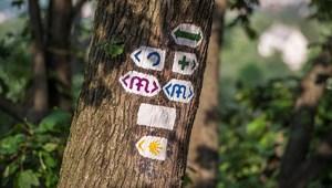 Feljelentést tett a XII. kerületi, amiért az MTA telkén kivágták a fákat