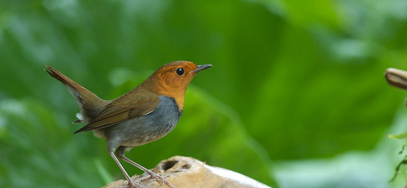 """Megvizsgáltak 1240 állatfajt: a vándorlók gyorsabban élnek és fiatalabban halnak, mint az """"otthonülők"""""""