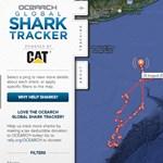 Valós időben követheti nyomon, merre járnak a rettegett cápák