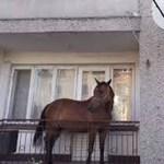 Legyen óvatos! Ha Csobánkán sétál, egy ló zuhanhat Önre