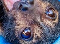 Sokkoló: olyan meleg volt két napon át, hogy belehalt egy állatfaj jelentős része