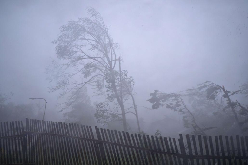 afp. szél, szeles, időjárás, nagyítás - Bingawan, Fülöp-szigetek, 2013.11.08. fák