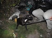 Vádat emeltek a gazda ellen, aki nyakon szúrta a bepiszkító kiskutyáját