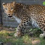 Izgalmas bioszteszt: tudjátok, milyen gyorsak a következő állatok?