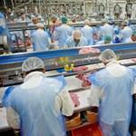 Úgy rejtegeti a kormány a migránsok számát, akár a vállalkozók a tömegszállásokra zsúfolt vendégmunkásokat