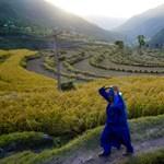 Mindennapi kenyerük a rizs - Nagyítás-fotógaléria