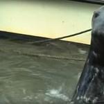 Fókák támadtak egy horgászra, ki kellett menteni