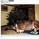 Falus Ferenc lóval kíván boldog karácsonyt