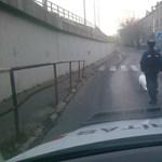 Fotó: Egy hattyú okozott dugót a Gubacsi hídon