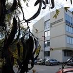 Új vezetőt kapott a Pallasz Athéné Egyetem: rektorokat nevezett ki Áder
